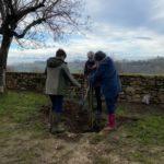 Plantation d'arbres fruitiers – Allée de la Merci